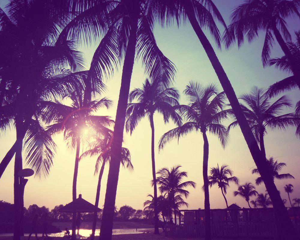 Iphone 6 wallpaper tumblr palm trees - Summer Tumblr Desktop Wallpaper