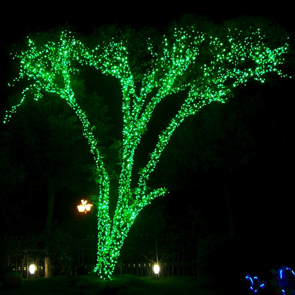 green lighted tree