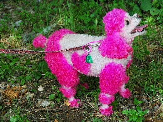 28 Funny Female Dog Names Inspired By Movie Characters Female Dog Names Dog Names Pink Poodle