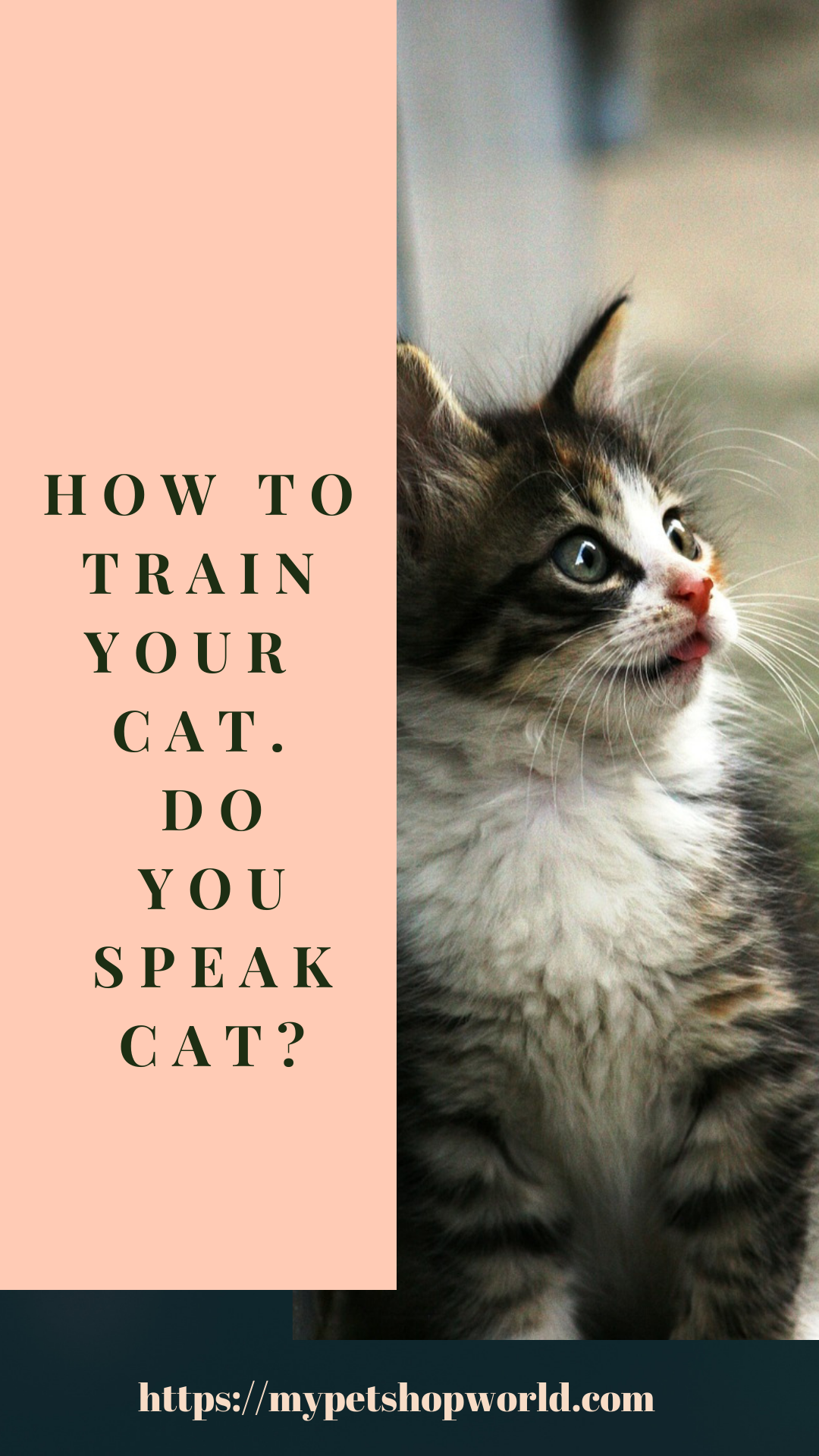 Do You Speak Cat Become Fluent In The Cat Language Understand Your Kitty In No Time In 2020 Cat Language Cats Cat Day