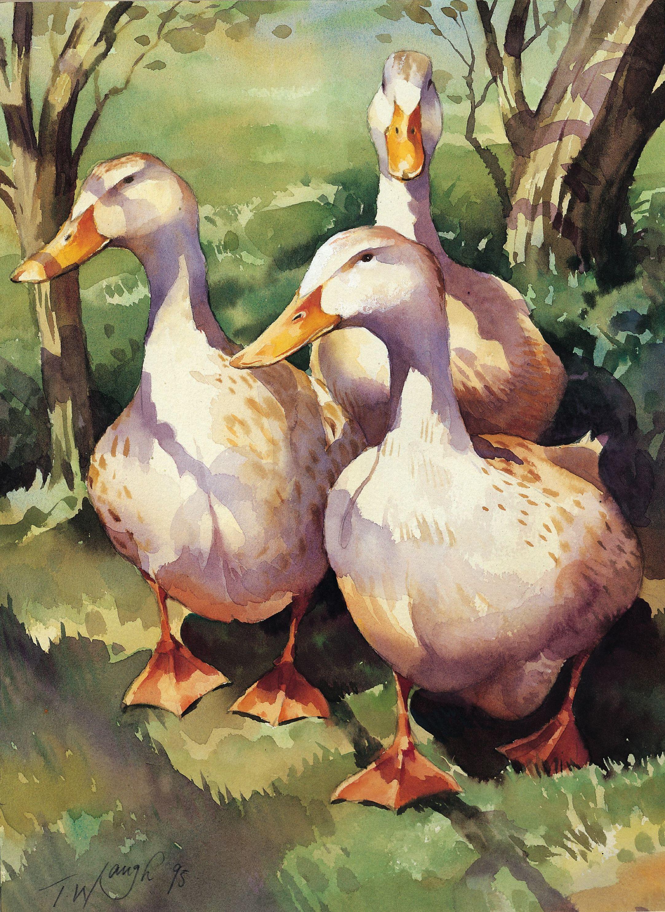 Reasonable Duck Painting Watercolour White Bird Animal Wildlife Nature Art