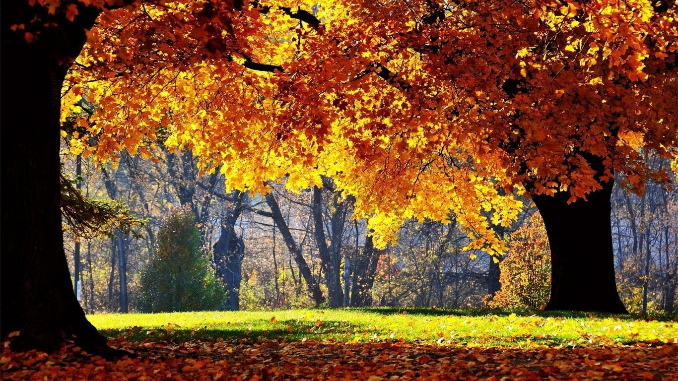 autumn trees - Buscar con Google | Current lesson plan ...