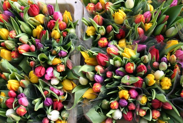 Tip Toe Through The Tulips Amsterdam Shopping Amsterdam Attractions Flower Market
