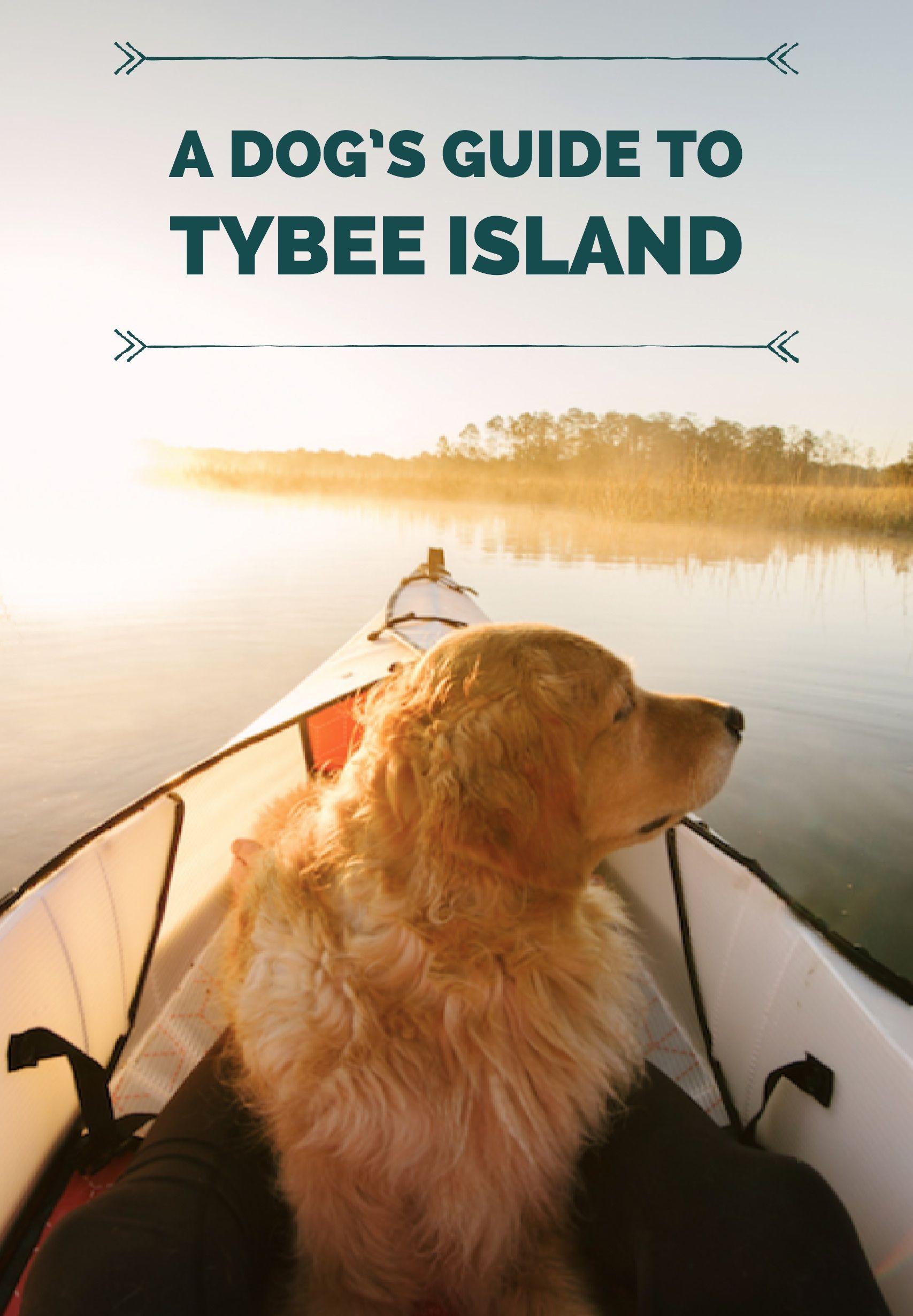 A Dog S Guide To Tybee Island Ga Dog Friendly Vacation Tybee Island Dog Friendly Beach