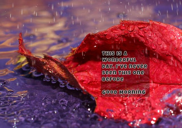 Wallpapers For Desktop And Background. The HD Picture Autumn Rain On The  Desktop