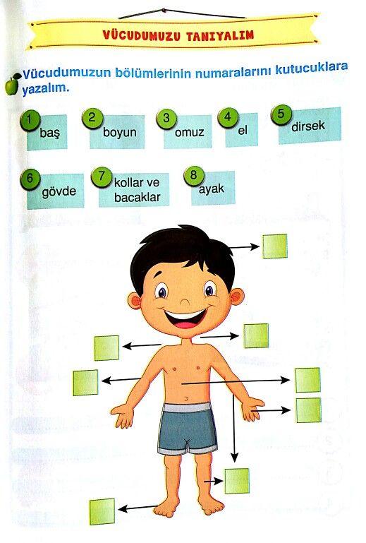Vücudun Bölümleri Hayat Bilgisi School