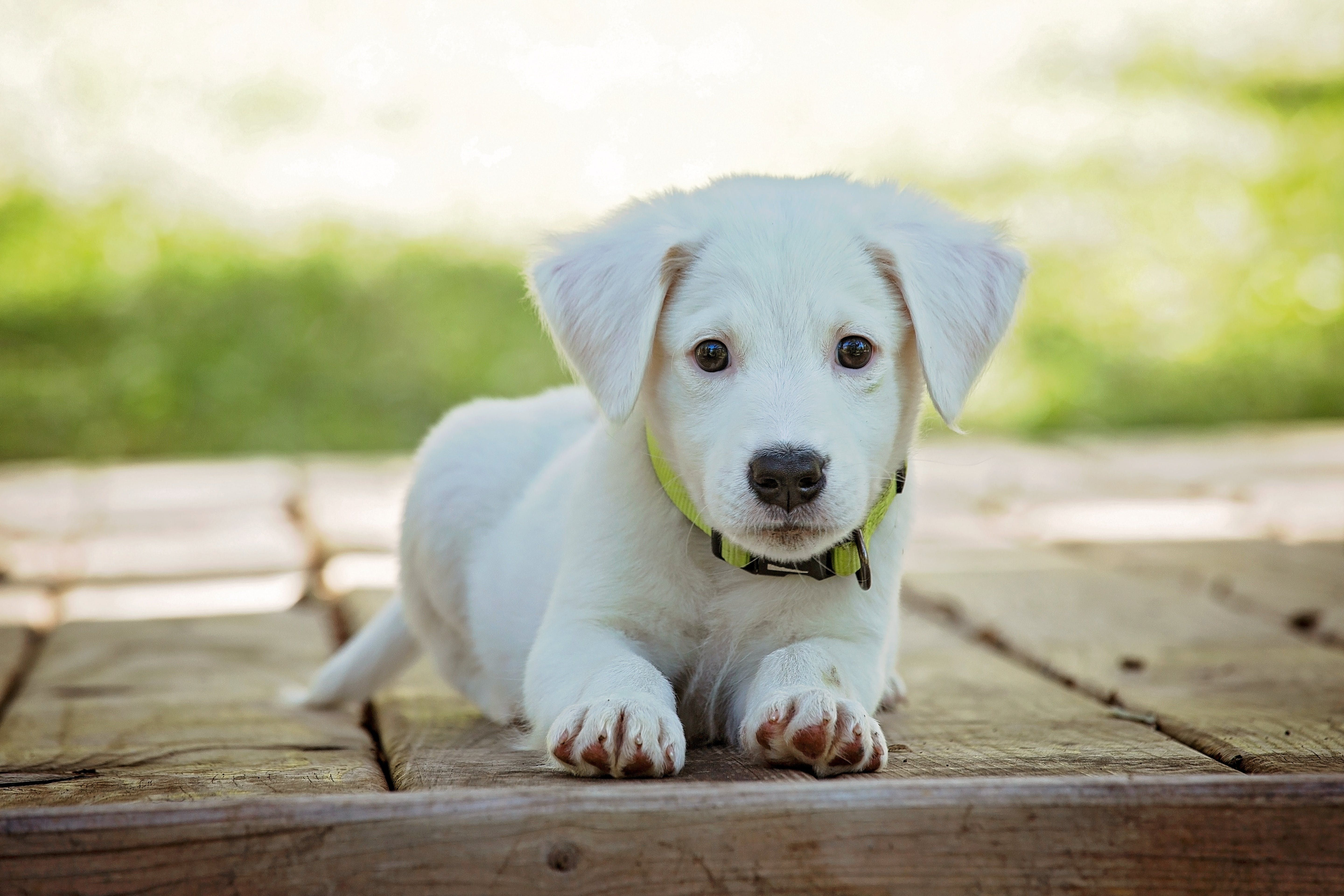 Dog Training Most People Believe That Dog Training Is Difficult