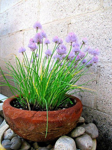The Wicker House Plants Gardens Potted Plants Patio Plants Patio Plants