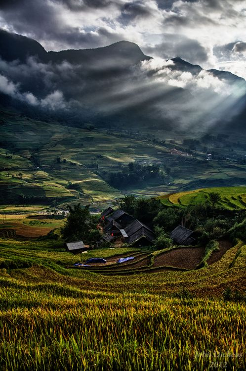 Vietnam byJohn Dickens