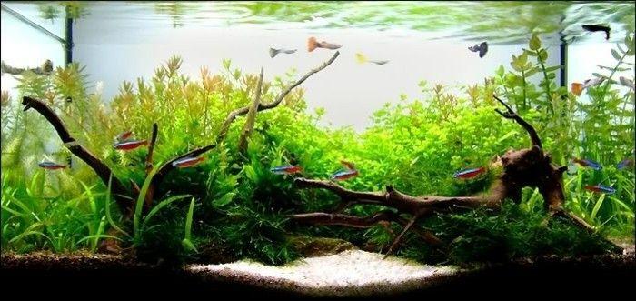 aquarium fur fische schon einrichten aquarium gestaltung
