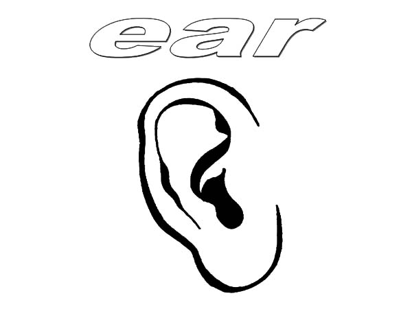 Ear Coloring Pages Kids Play Color Coloring Pages Ear Color