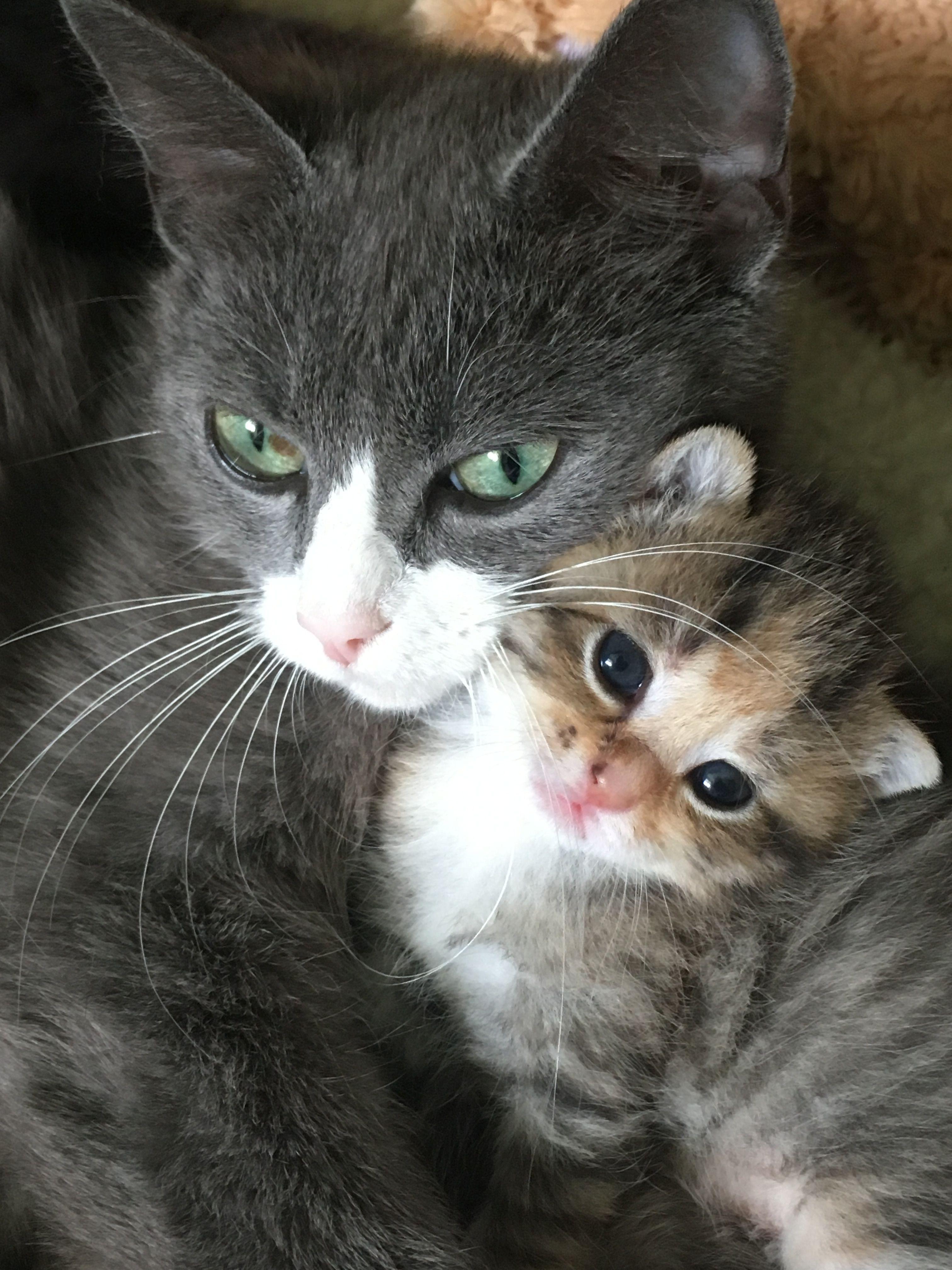 Mothercat Bibi and kitten Lara Dierenasiel Zuidwolde