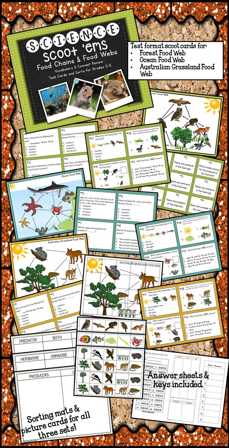 Food Chains & Food Webs Task Cards Science Scoot 'ems
