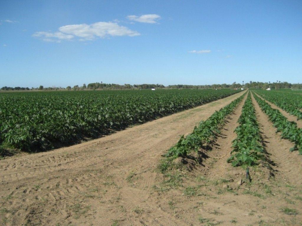 For Sale Large scale Burdekin horticulture operation
