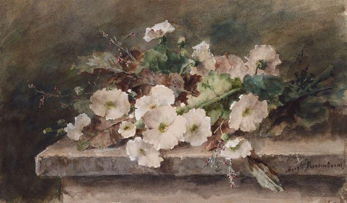Roosenboom Margaretha. Zweige weißer Malven auf einem Steintisch. Aquarell auf Bütten.