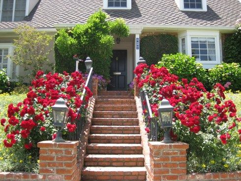 Now Isnu0027t This A Show Stopping Front Garden. These Roses Make This House