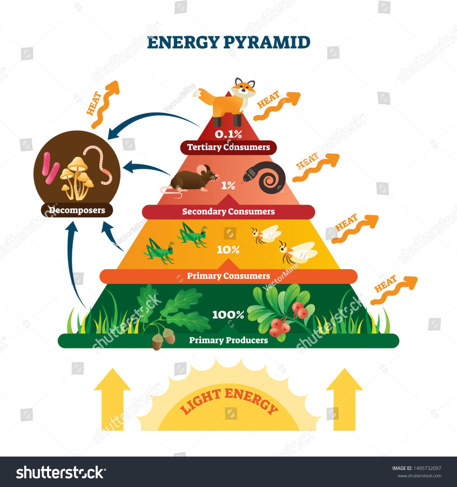 Energy Pyramid Vector Illustration Labeled Biomass Representation Graphic Educational Bioproductivity L Energy Pyramid Ecological Pyramid Science Food Chains