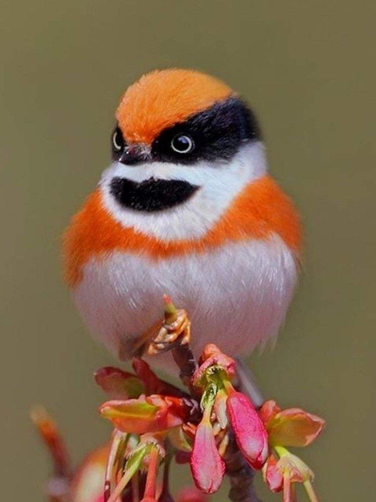 Halloween Bird 2 Of My Favorite Things In 1 Beautiful