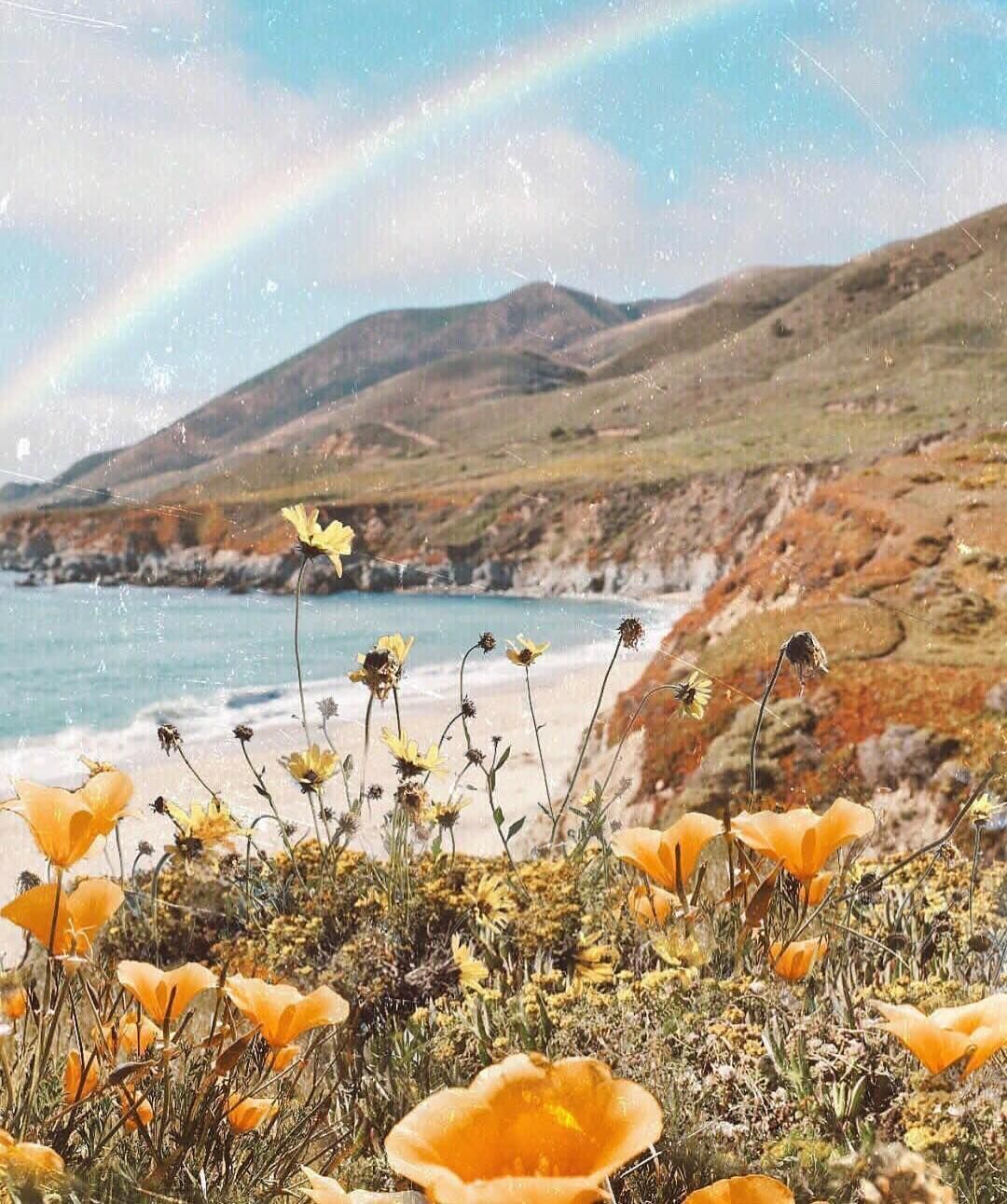 Omni Curated On Instagram Wildflowers Rainbow And The Sea Can It Get Better Odwyer Sio Aesthetic Wallpapers Nature Photography Nature Aesthetic