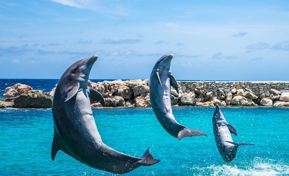 Dauphins, Aquarium, Saut, Poissons, Des Animaux, Océan