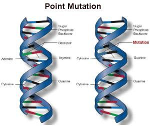 Learn About How The Gene Mutation Works Point Mutation Mutation