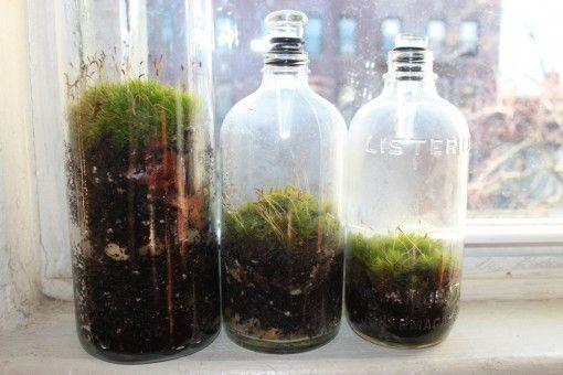 Moss Terrariums Vintage Bottles Moss Garden Design Squish Blog