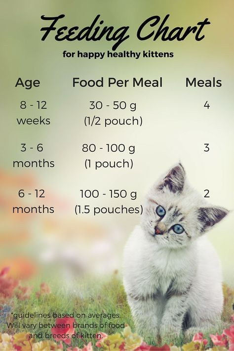 Wet Kitten Food Chart Feeding Kittens Cat Care Kitten Care