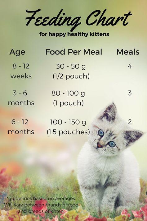 Wet Kitten Food Chart Feeding Kittens Cat Care Kitten Food