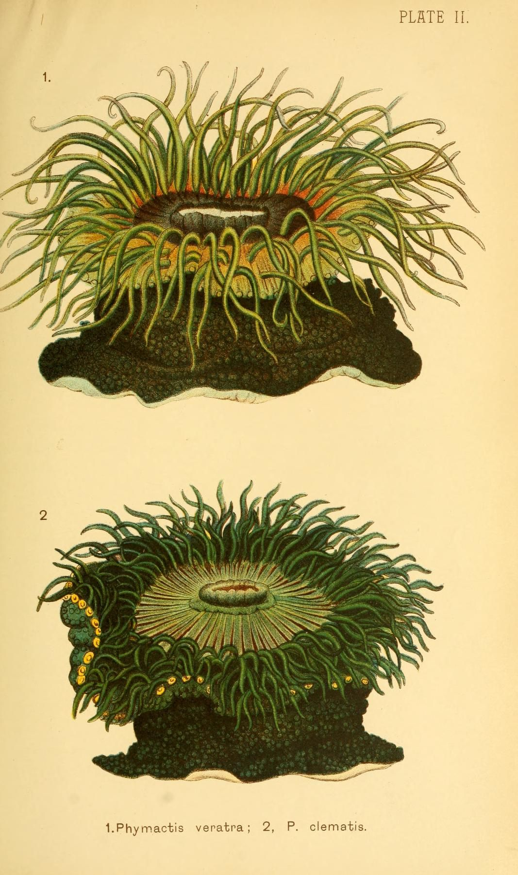 1890 Corals and coral islands / - Biodiversity Heritage Library