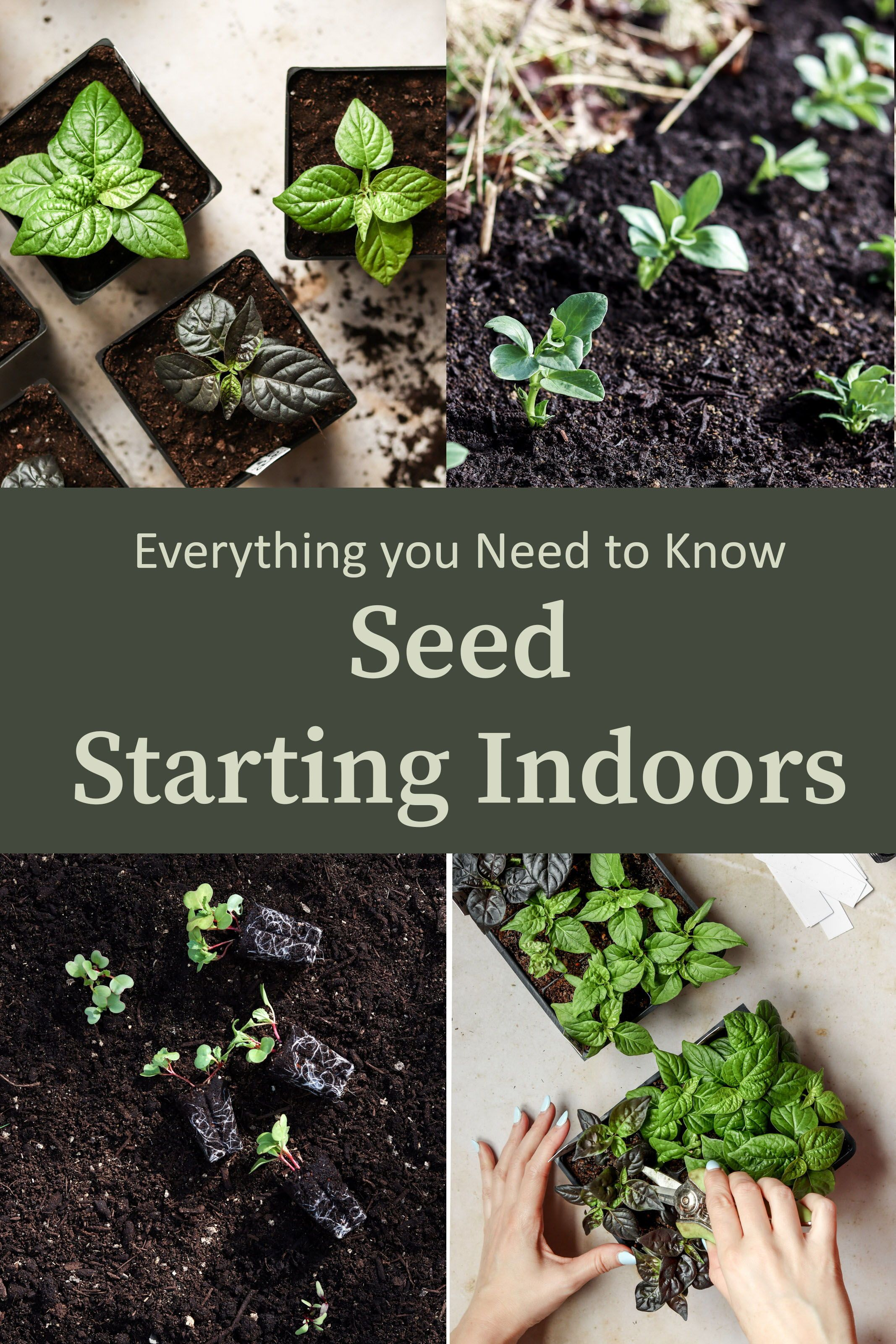 Starting Seeds Indoors Why What You Need And How Starting Vegetable Seeds Starting Seeds Indoors Seed Starting