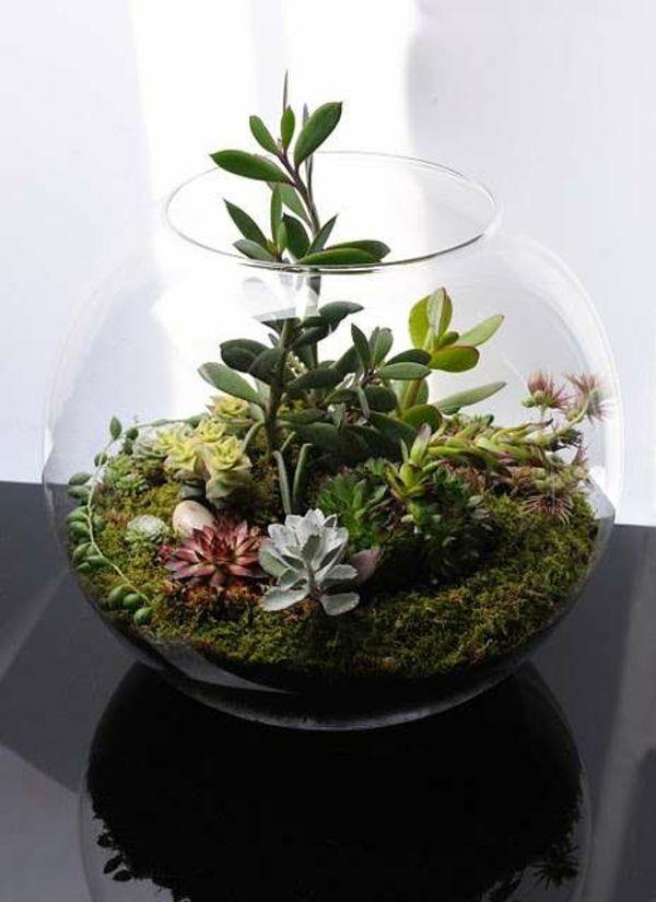 Terrarium Pflanzen Moos Glas Gefäss Zimmerpflanzen