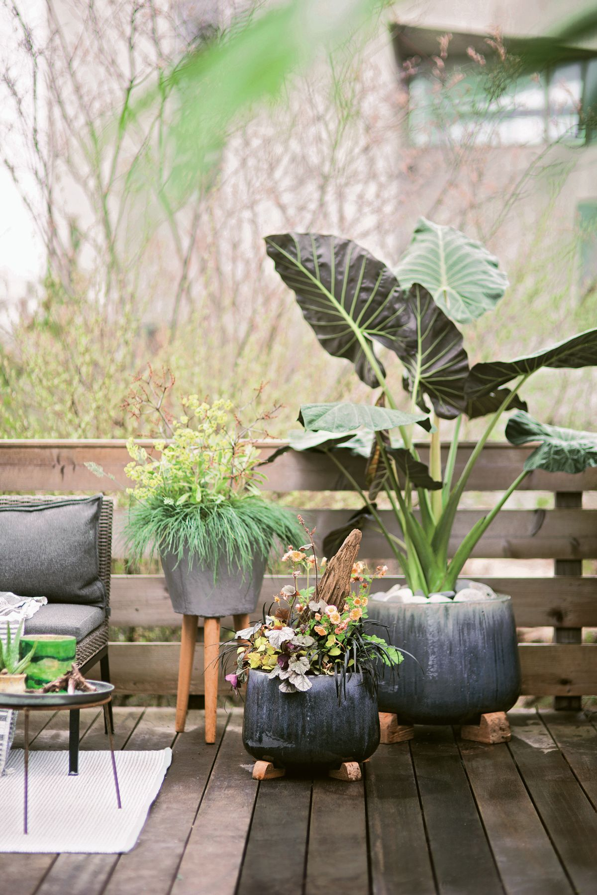 Container Gardening Mistakes You're Making and How to Fix ...