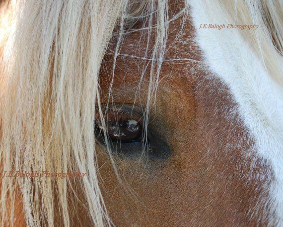 Horse Photographyequestrian Art Close Up Horse By Bizzycatstudio 20 00 Horses Tiny Horses Art Photography