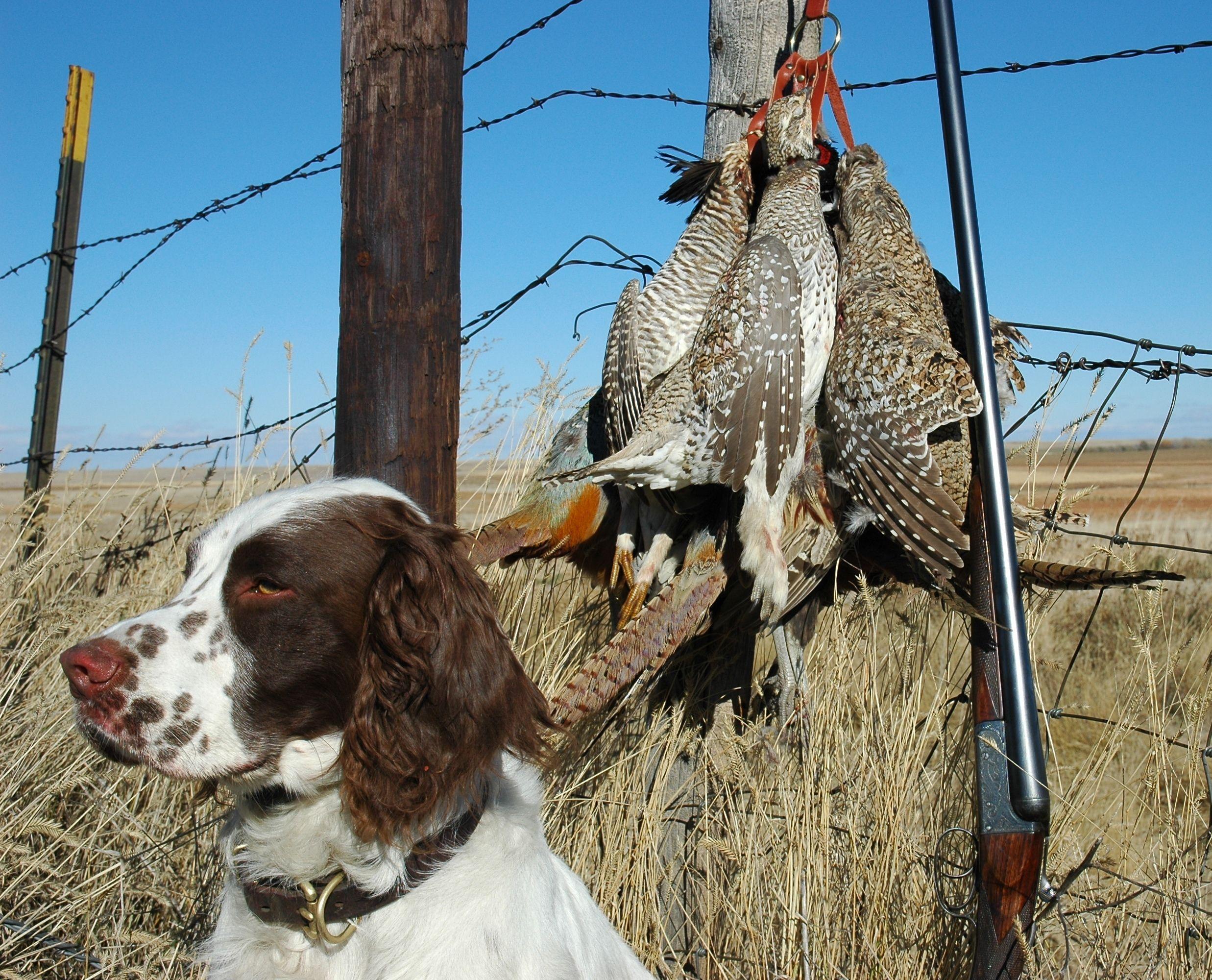 Rosebud Indian Reservation Upland Bird Hunting Report