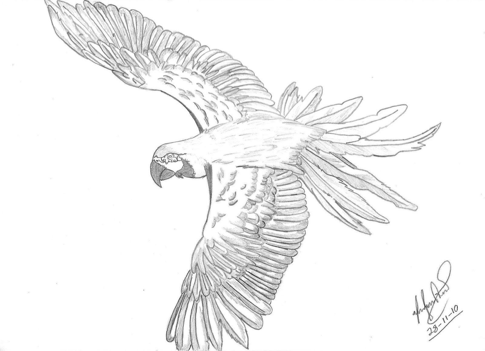Fabuloso araras desenho - Pesquisa Google | araras e passaros | Pinterest  AT46