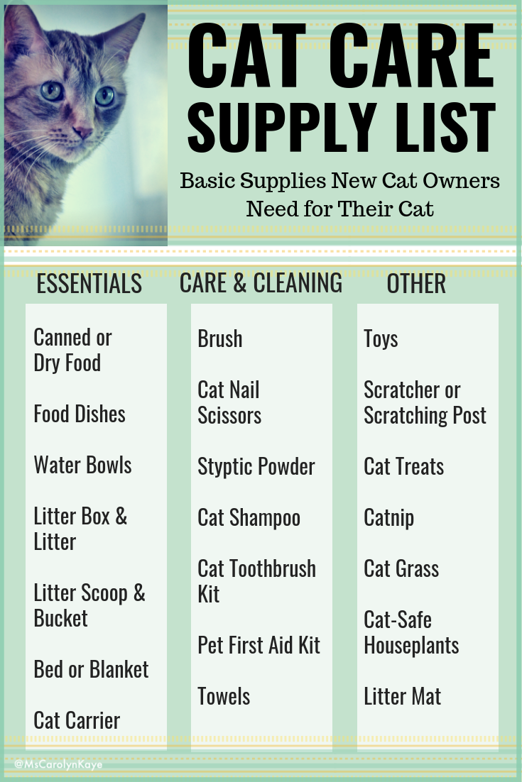Cat Care 101 A Guide For New Cat Owners Cat Care Cat Care Tips Cat Essentials