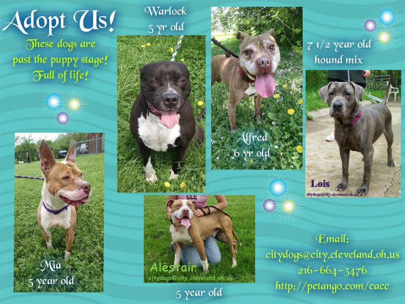 Adults 2166643476 Email citydogscity.cleveland.oh.us