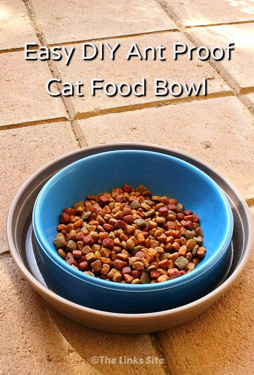 Easy Diy Way To Ant Proof A Cat Food Bowl Thelinkssite Com