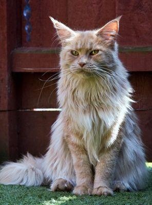 Pin On Animals Kitties 2