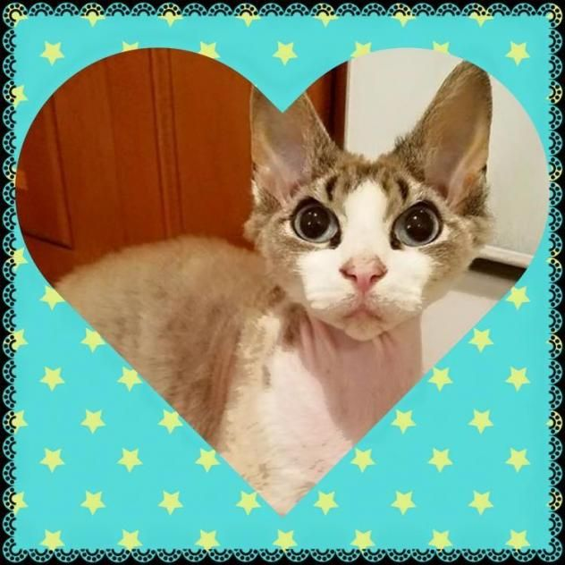 Kahlua With Images Animals Cats Carel