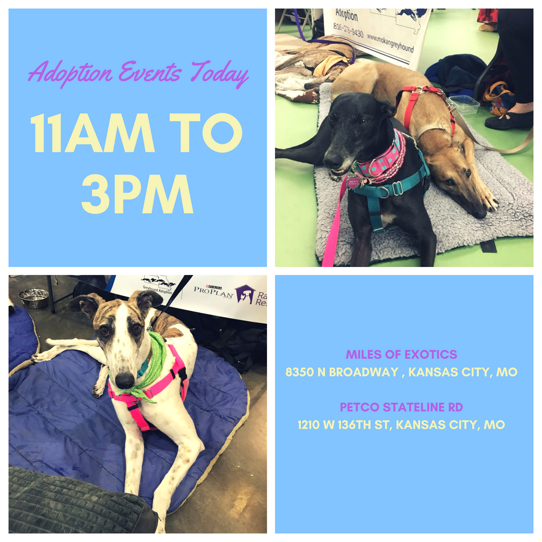 Join Us Today For Some Greyhound Love Hugs And Kisses At The Petco At 136th And Stateline Or Miles Of Exotics From 11am To 3 Greyhound Adoption Adoption Petco