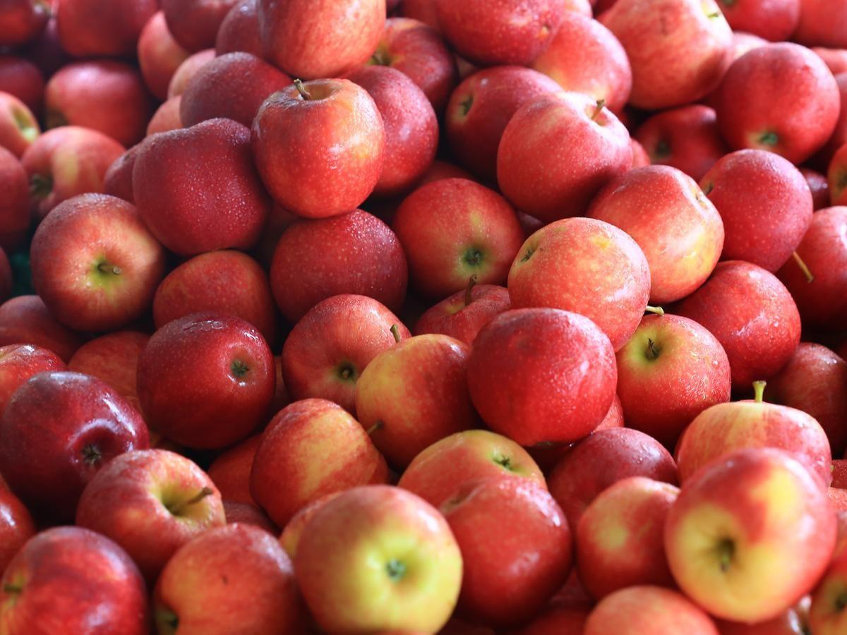 10+ Where to buy cosmic crisp apples near me ideas in 2021