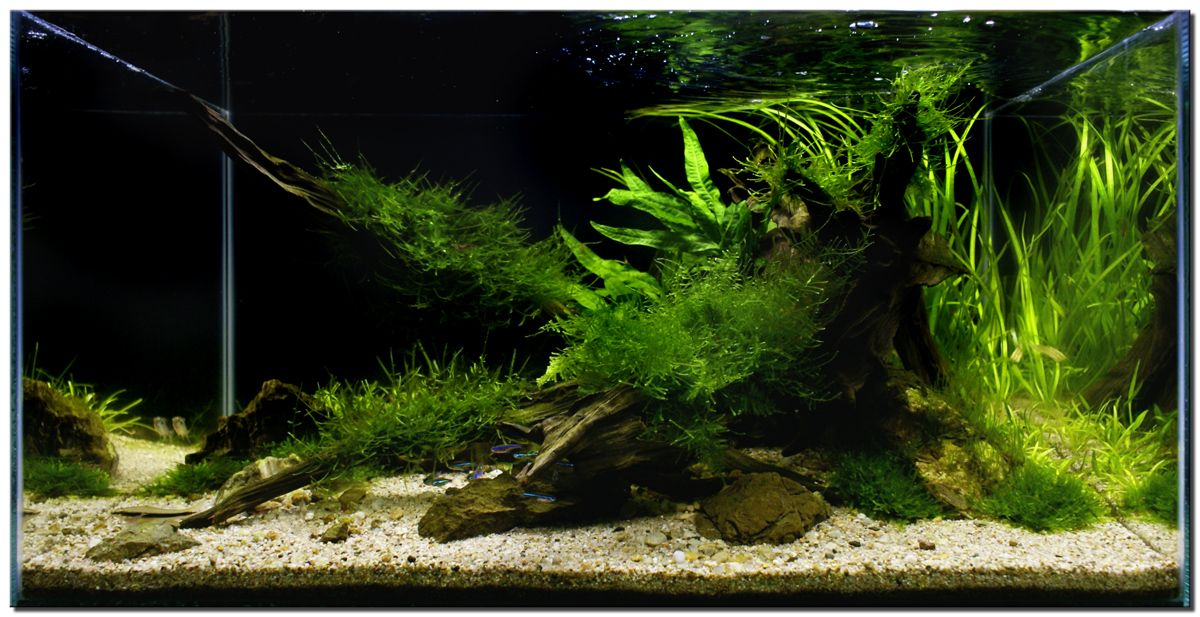 Aquascape of the month november 2009 riverbank terrariums nanos pinterest aquarium - Design aquasacpe ...