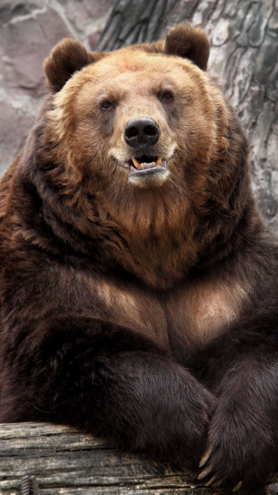 1080x1920 wallpaper bear, zoo, nature, reserve, muzzle | awwww