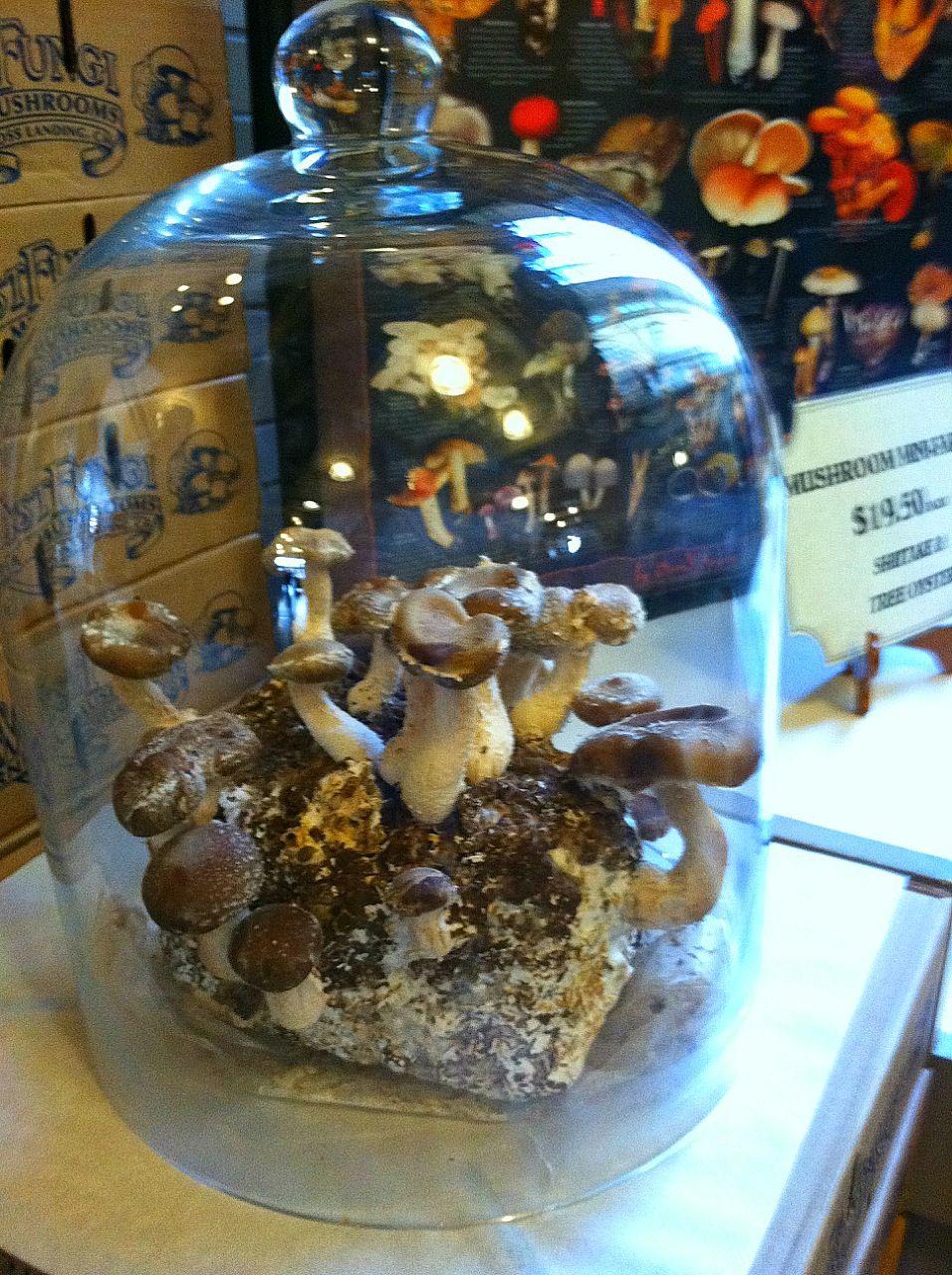 Indoor Mushroom Garden Indoor mushroom farm gardening flowers and plants pinterest indoor mushroom farm workwithnaturefo