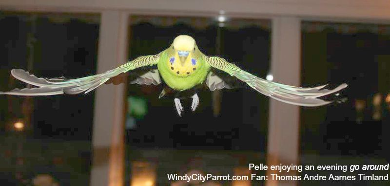 Pin On Parrot Care
