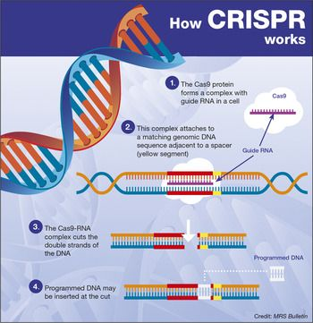 Crispr Implications For Materials Science Molecular Genetics