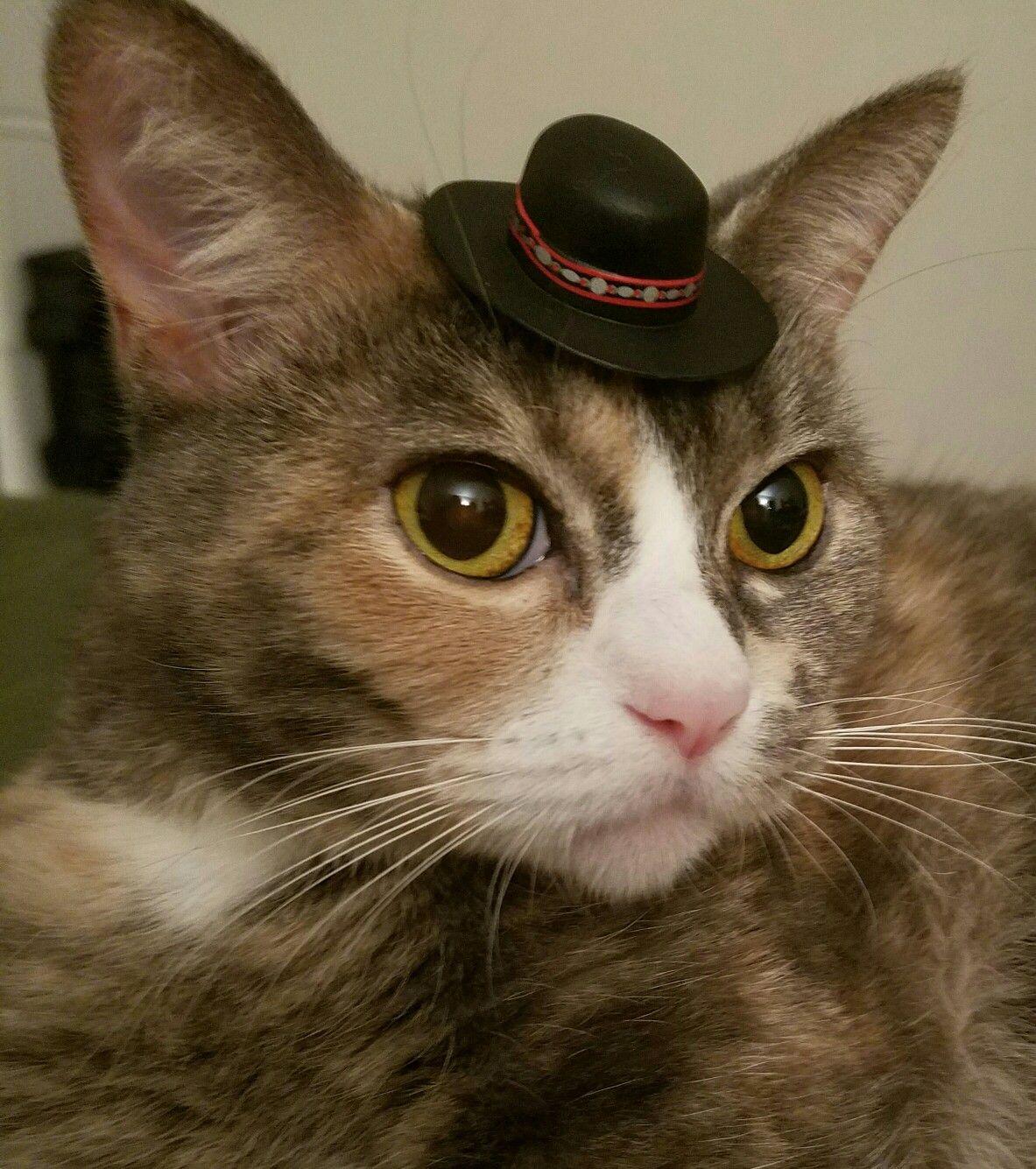 A little cat wearing a little hat.