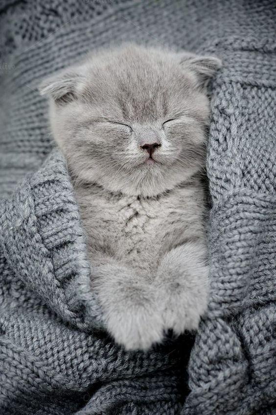 Want more cute fluffy kittens? Click the photo for more! #catloverscommunity #catloverscommunity #cats #kittens #fluffykittens