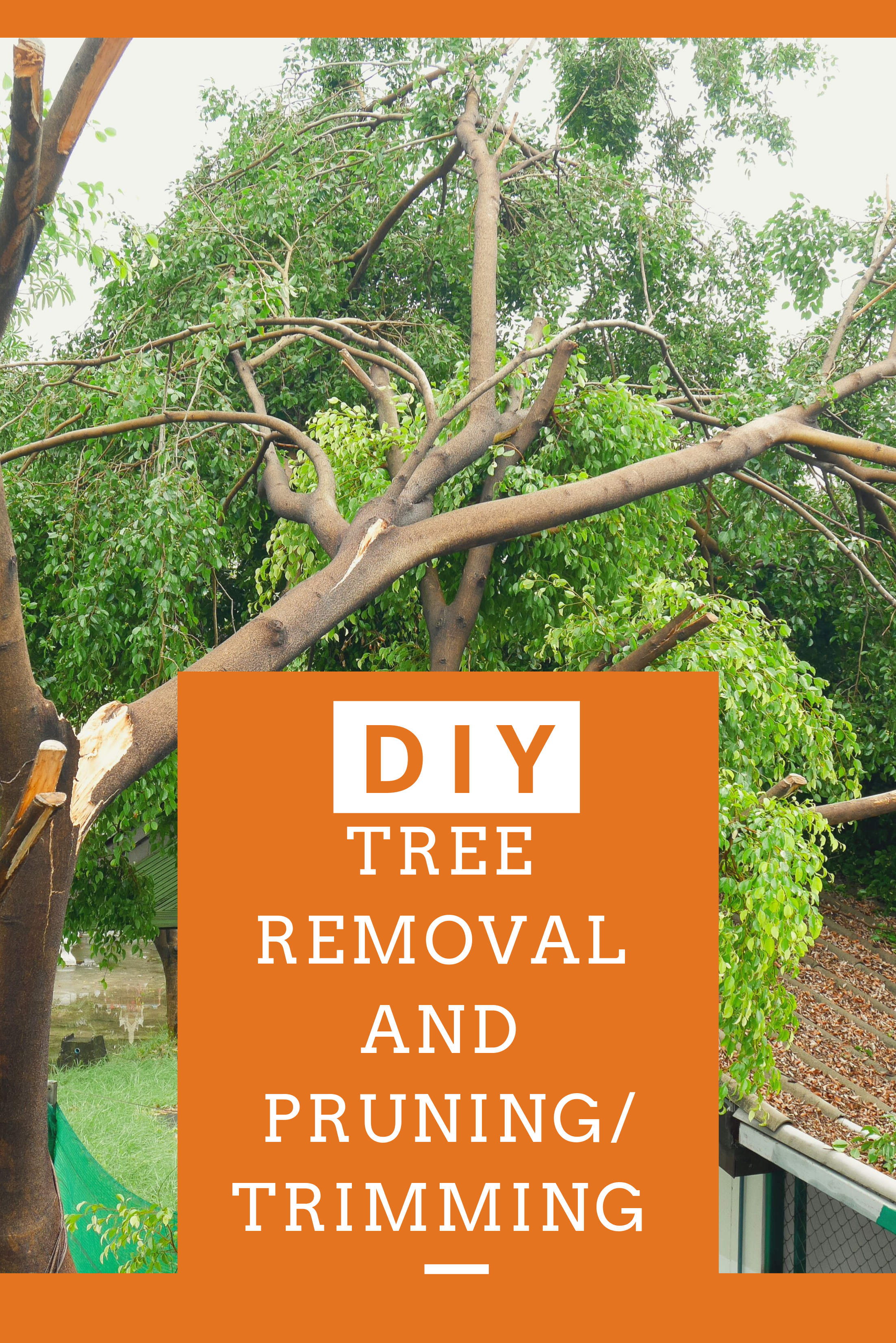 How Much Do Tree Services Cost? | How to remove, Home ...